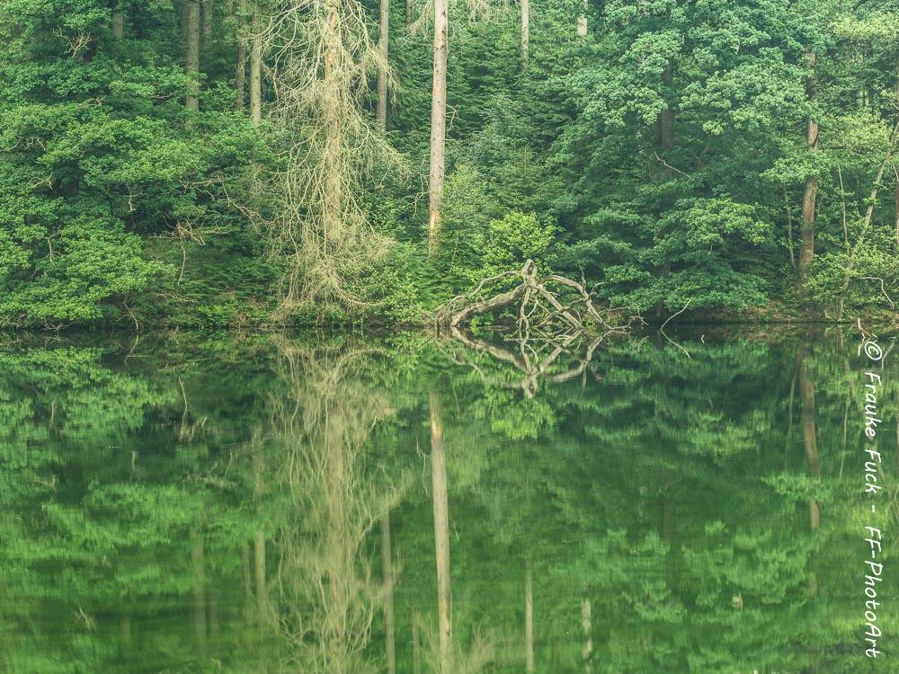 Wupper Amazonas