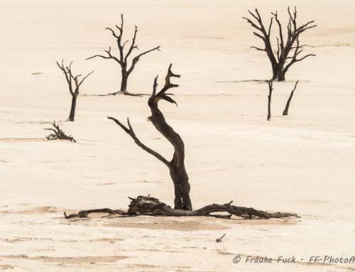 Die Namib und das Sossusvlei