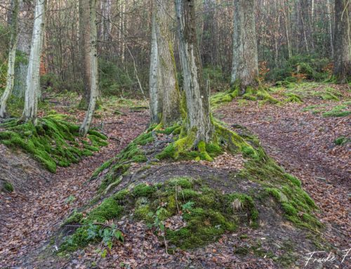 Fotoprojekt Bergisches Land